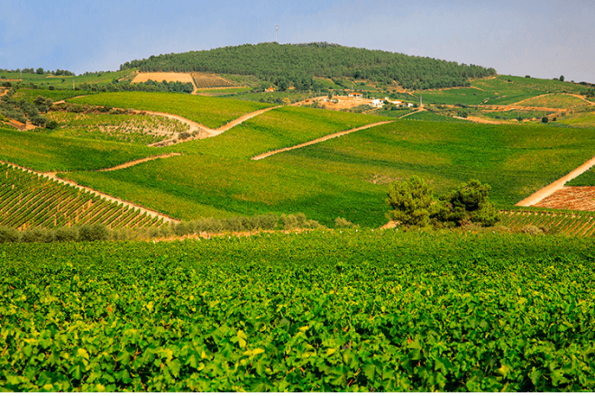 Do not miss the best wine tourism visits in the Douro region