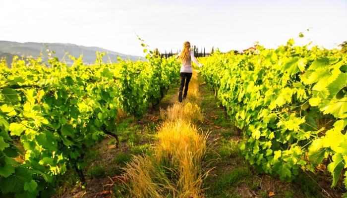 A bela Região do Douro é uma das mais antigas regiões vinícolas do mundo!