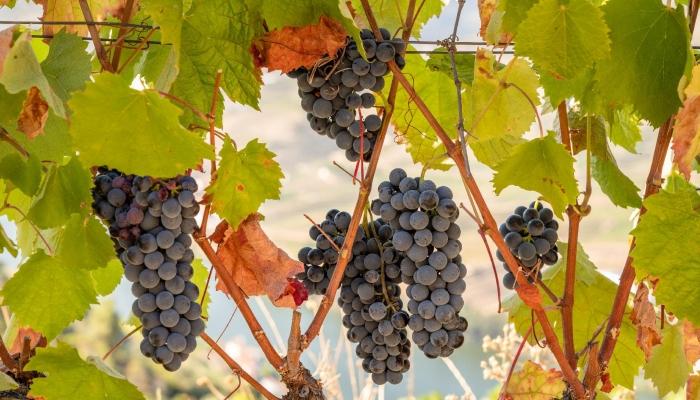 Descubra a Região Vínicola produtora dos três melhores vinhos do mundo: Vale do Douro