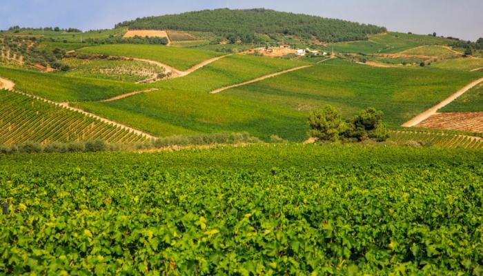 A aldeia vinhateira de Favaios é surpreendente, assim como o seu vinho Moscatel
