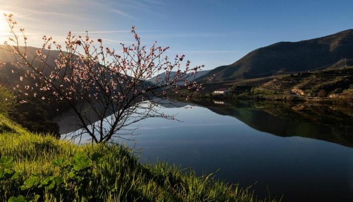 Os paladares do Douro complementa a paisagem e história da Região