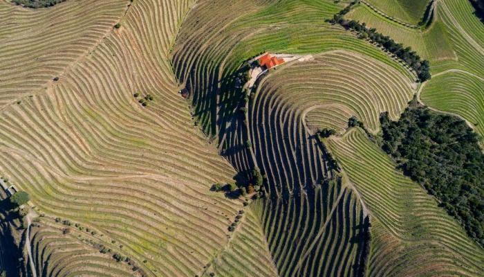 O Vale do Douro tem atraído milhares de turistas vindos dos quatro cantos do mundo
