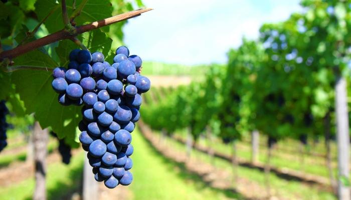 Os Vinhos do Porto e Douro têm merecido o aplauso da crítica internacional