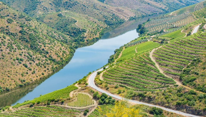 Os socalcos do Douro, o seu Rio e clima criaram uma das Gastronomias mais deliciosas do mundo!