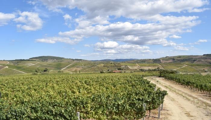 Descubra a aldeia de Favaios e deixe-se surpreender pelos sabores do Douro.