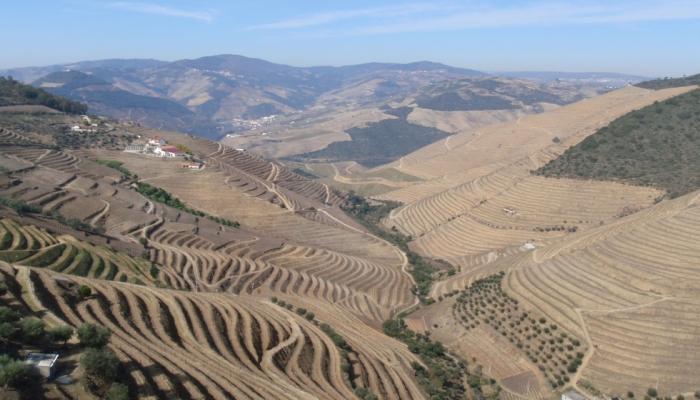 O concelho de São João da Pesqueira está envolto numa paisagem única, pintada com as dores da cultura da vinha e do vinho.