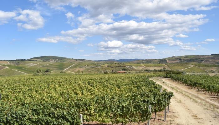 Favaios é uma região conhecida pelo seu famoso (e delicioso) Moscatel