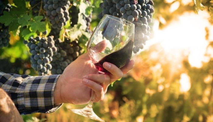 E o dia não fica completo sem uma deliciosa prova de vinhos, assistida pelos mais experientes enólogos da Quinta.