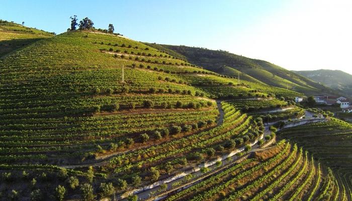 A Quinta de S-Luiz é uma das várias Quintas Vínicolas que são propriedade da Sogevinus