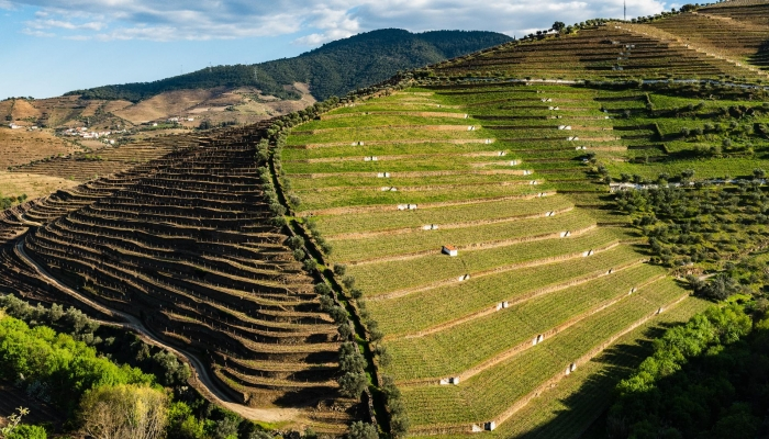 Dos socalcos aos vinhos, das paisagens à Cultura e Gastronomia, o Vale do Douro é um encanto