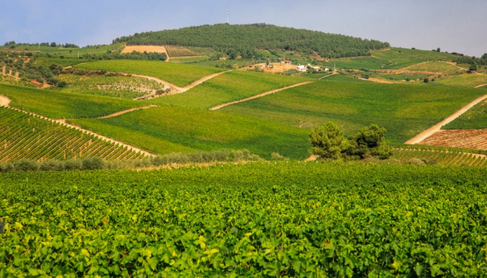 A aldeia de Favaios fica localizada mesmo no coração do Douro
