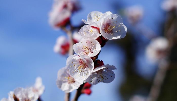Na Primavera, a região celebra o florescer da sua típica flor, a de amendoeira