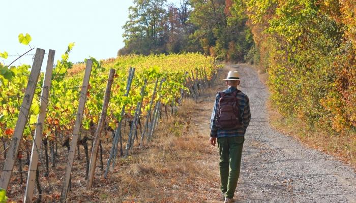 Uma caminhada pelas vinhas do Douro será uma experiência inesquecível
