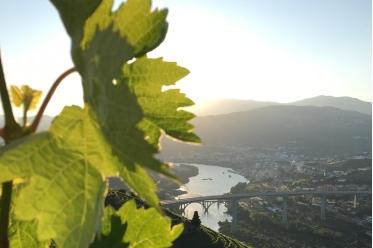 2 Days Cruise: Porto-Régua-Porto - Up and Down