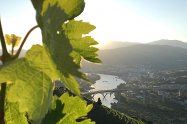 Croisière Porto-Régua-Porto (Montée et Descente)