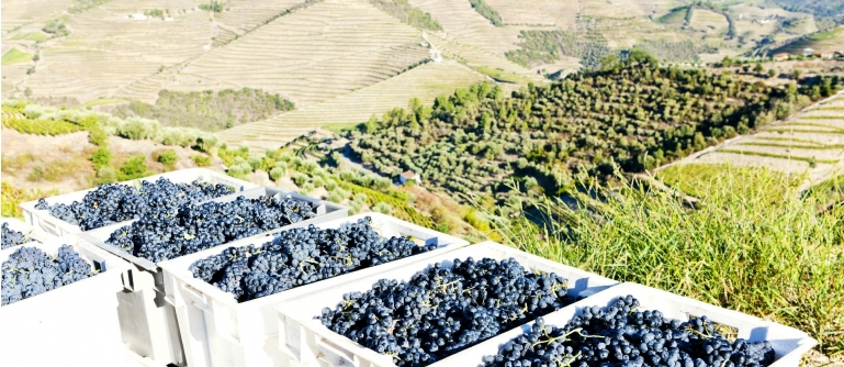 Douro Harvests Cruise